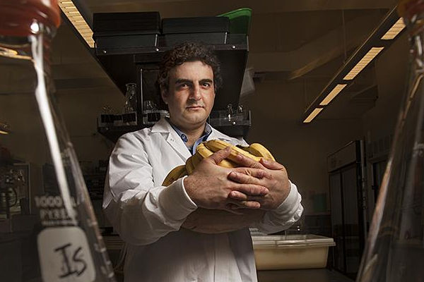 Έλληνας επιστήμονας ανακάλυψε τον τρόπο σωτηρίας της Μπανάνας!